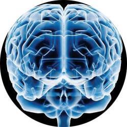 10-de-cerebro