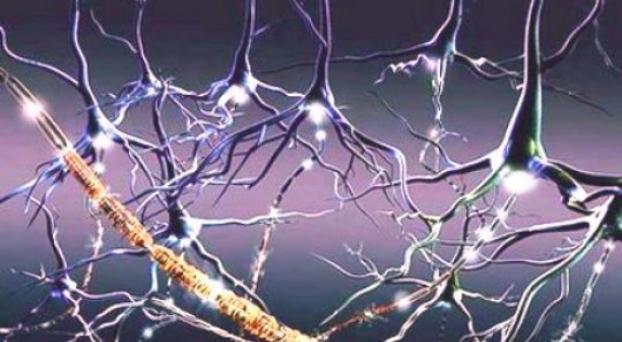 ¿Cuáles son los signos y síntomas de la esclerosis lateral amiotrófica?
