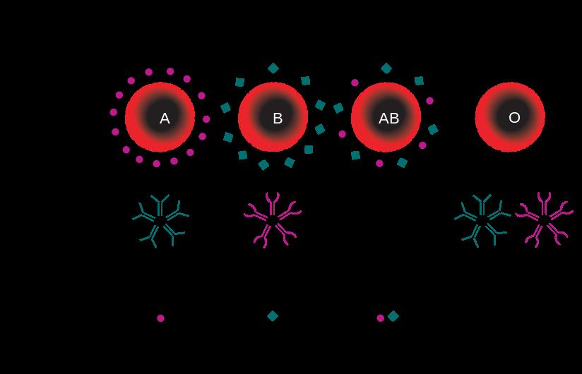 acido urico w examen de orina relacion acido urico creatinina metabolismo acido urico pdf